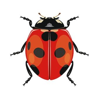 Mariquita o mariquita sobre fondo blanco. insecto. escarabajo negro-rojo.