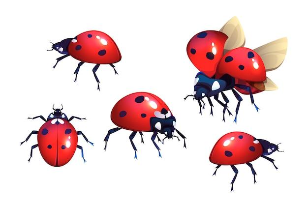 Mariquitas con manchas rojas y negras.