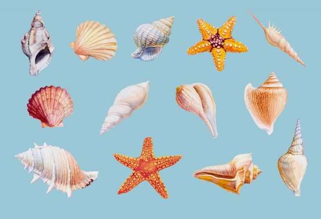 Dé los mariscos y las estrellas de mar exhaustos en el fondo blanco, ejemplo del vector.