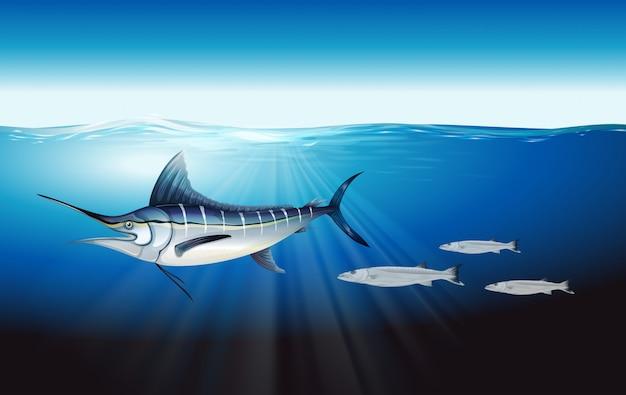 Marlin azul atlántico