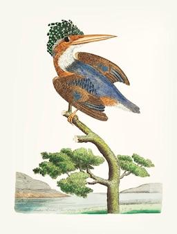 Martín pescador de cresta dibujado a mano