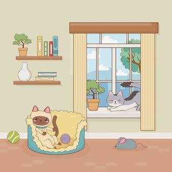 Mascota de gatos pequeños en la habitación de la casa