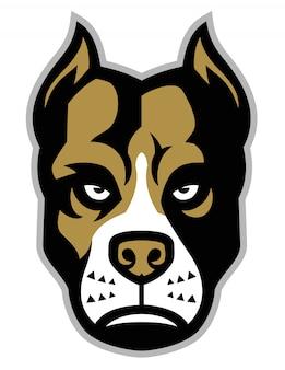 Mascota pitbull