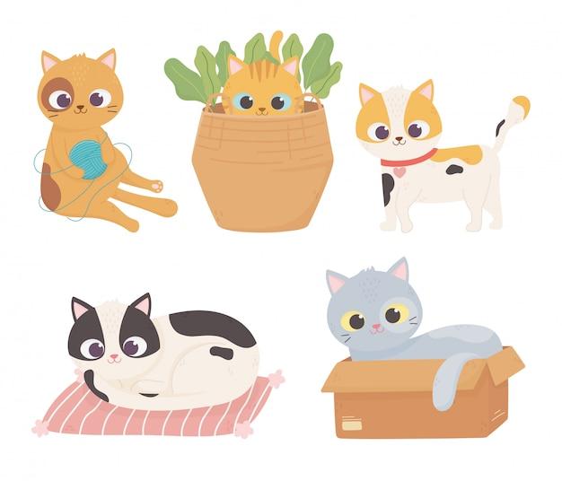 Mascotas gatos lana bola caja de cartón cojín mascota mascota conjunto de dibujos animados ilustración