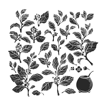 Mate plant set colección de calabaza de aislar bebida de hierbas tradicionales orgánicas
