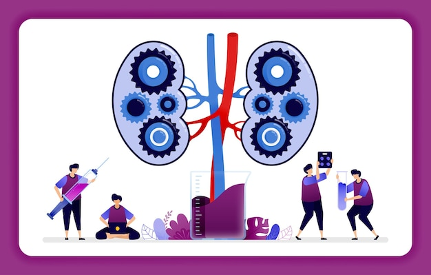 Mecanismos en el riñón para la investigación y la educación de laboratorio