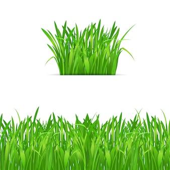 Mechón de hierba verde y borde sobre fondo blanco.