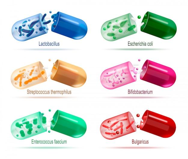 Medicamentos con probióticos bacterias conjunto de vectores