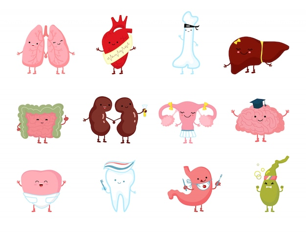 Medicina salud órganos humanos con sonrisa en carácter anatomía dibujada a mano saludable aislado en blanco.