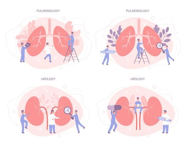 El médico hace un examen de riñón. idea de tratamiento médico. urología, neumología, órgano humano interno. cuerpo saludable.