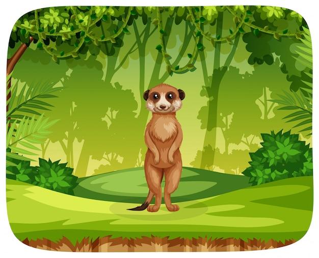 Meercat en la escena de la selva