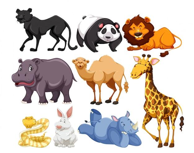 Mezcla de animales de vida salvaje.