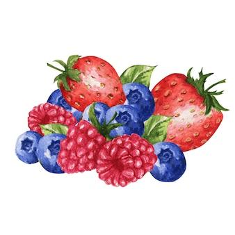 Mezcla de bayas silvestres, fresa, frambuesa, arándano aislado sobre fondo blanco.