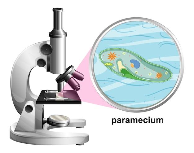 Microscopio con estructura de anatomía de paramecium sobre fondo blanco.