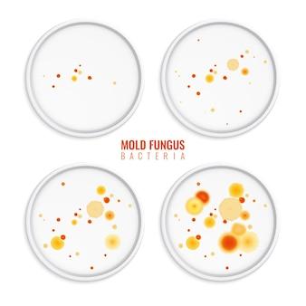 Molde, hongos, bacterias, colonias, conjunto, de, cuatro, realista, s, con, marcos redondos, colorido, puntos, y, texto, ilustración