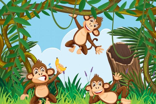 Moneky en escena de la jungla