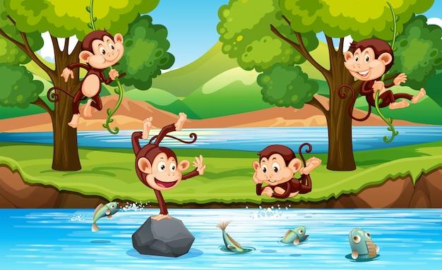 Mono en el bosque