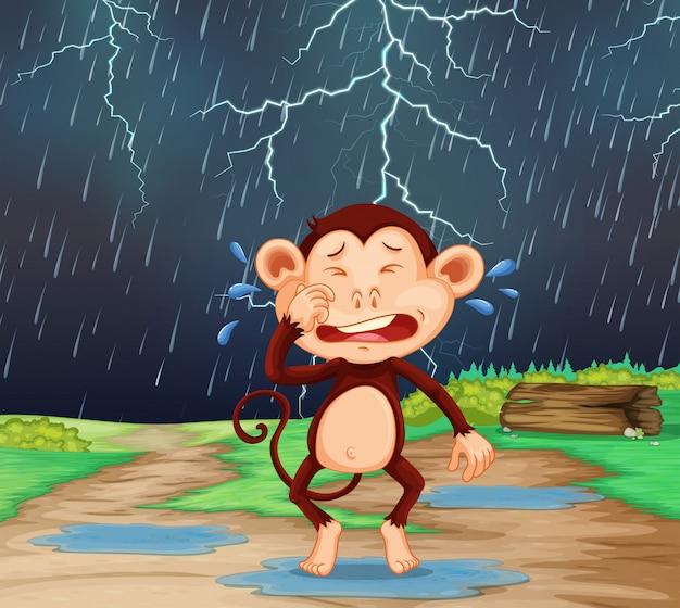 Un mono cary en escena lloviendo.