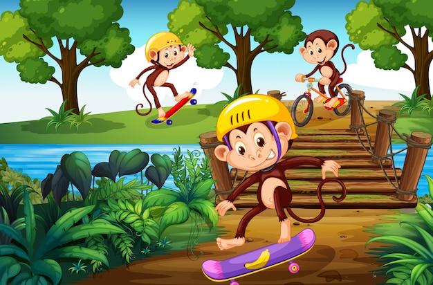 Mono y deporte extremo en el parque.