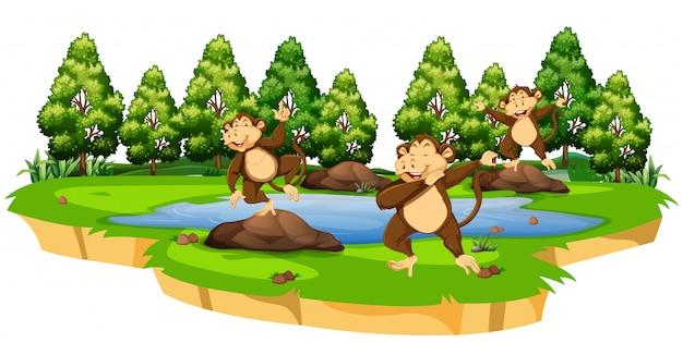 Mono en la escena de la naturaleza