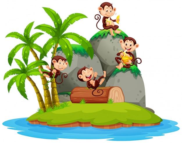 Mono feliz en la isla aislada