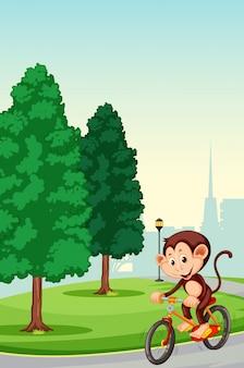 Mono montando bicicleta en el parque