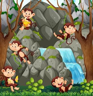 Mono salvaje en la naturaleza