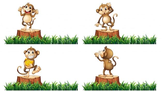 Monos felices en los árboles del tocón
