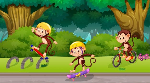 Monos jugando en la escena del parque