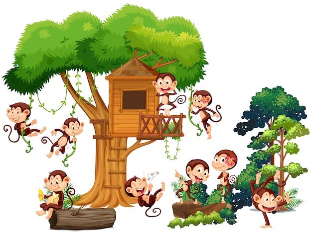 Monos jugando y trepando por la casa del árbol.