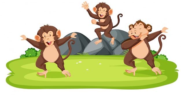 Monos en la naturaleza