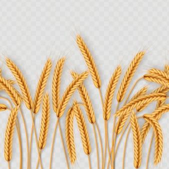 Montón de espigas de trigo, granos secos enteros sin costura realista ilustración aislada sobre fondo transparente. plantilla de objeto de panadería.