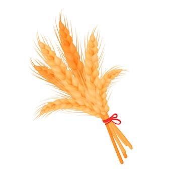Montón de espigas de trigo o cebada, tallos enteros amarillos maduros aislados en blanco