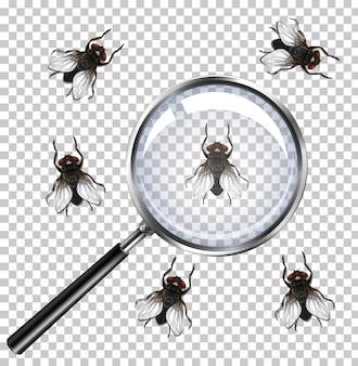 Mosca insectos con lupa aislado en transparente