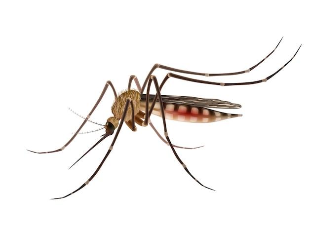 Mosquito realista ilustración