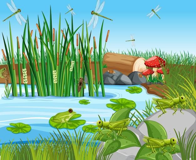 Muchas ranas verdes y libélulas en la escena del estanque.