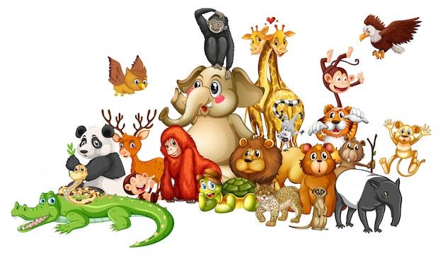 Muchos animales en blanco