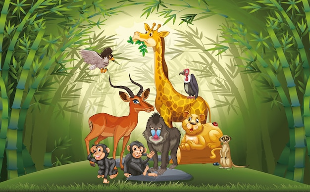 Muchos animales en el bosque de bambú