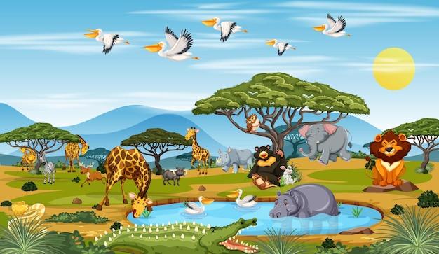 Muchos animales diferentes en la escena del bosque.