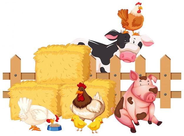 Muchos animales de granja sobre fondo blanco.
