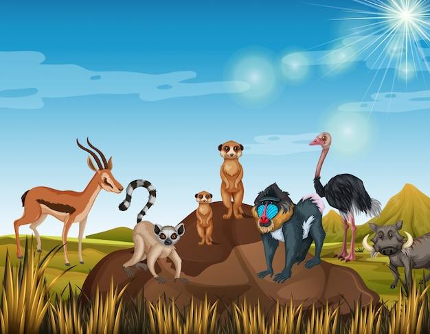 Muchos animales de pie en el campo.