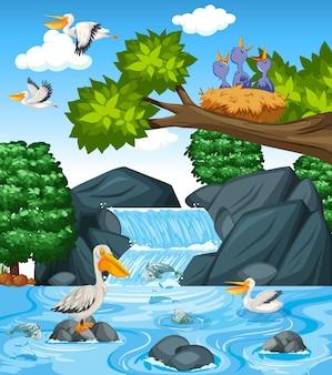 Muchos pelícanos marrones en la escena de la cascada.