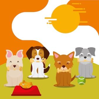 Muchos perros en el campo con pelota de juguete y comida de tazón