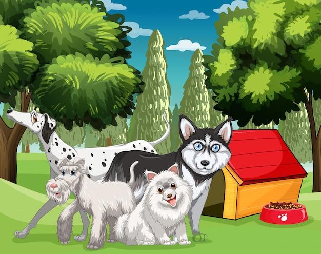 Muchos tipos de perros en el parque.