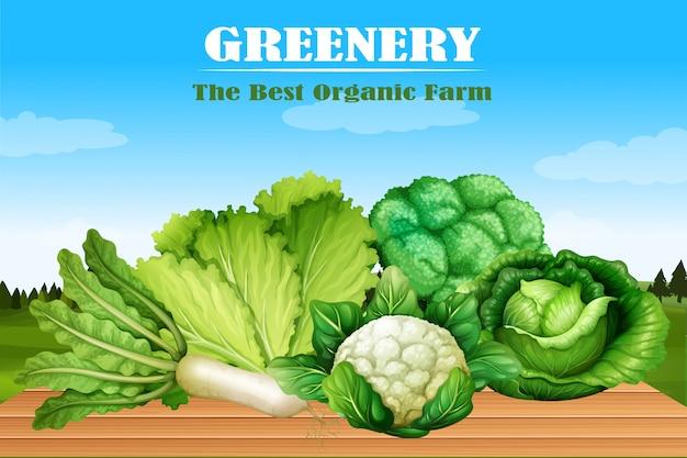 Muchos tipos de vegetales verdes.