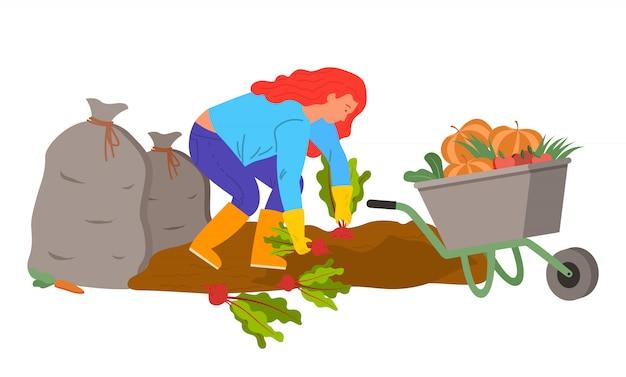 Mujer cosechando en plantaciones, plantas de remolacha