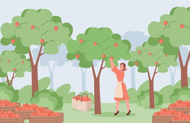 Mujer joven en vestido rojo recogiendo manzanas rojas maduras