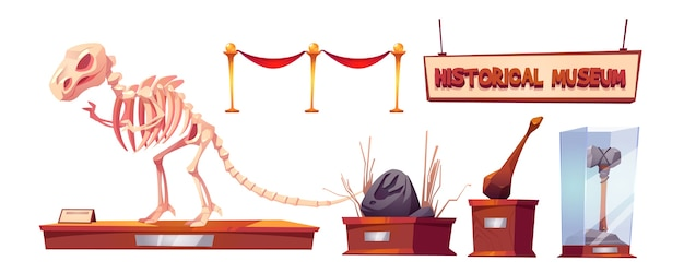 Museo histórico con esqueletos de dinosaurios y exhibiciones arqueológicas. conjunto de dibujos animados de hallazgos de paleontología y arqueología, animales prehistóricos y herramientas primitivas de cavernícola