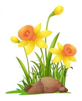 Narciso flores en el jardín