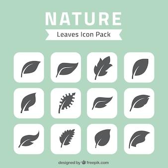Naturaleza deja iconos paquete
